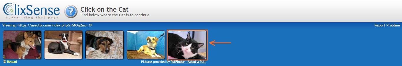 Click en el gato de Clixsense